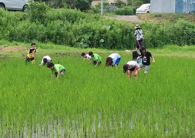 田んぼの除草
